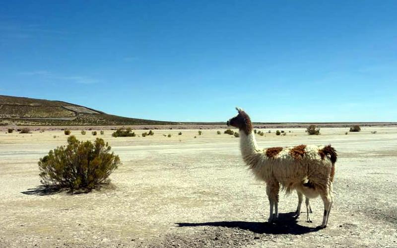 cicloturismo llama bolivia