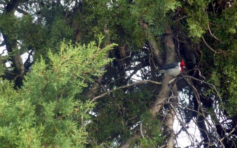 cicloturismo uruguay cardenal